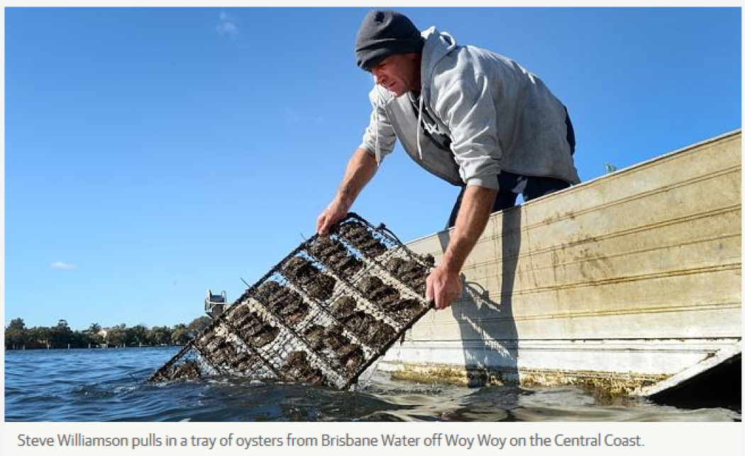 Broken Bay Pearls is a tiny Aussie company going head to head with the world's biggest pearl producers – Daily Telegraph